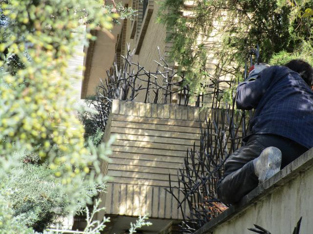 حفاظ شاخ گوزنی روی دیوار محوطه