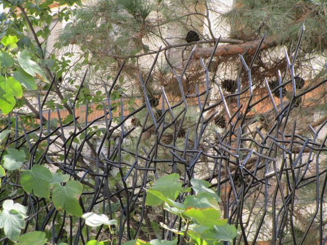 حفاظ شاخ گوزنی برای محوطه