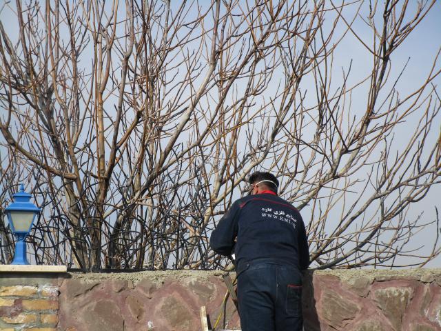 نصب رایگان حفاظ شاخ گوزنی